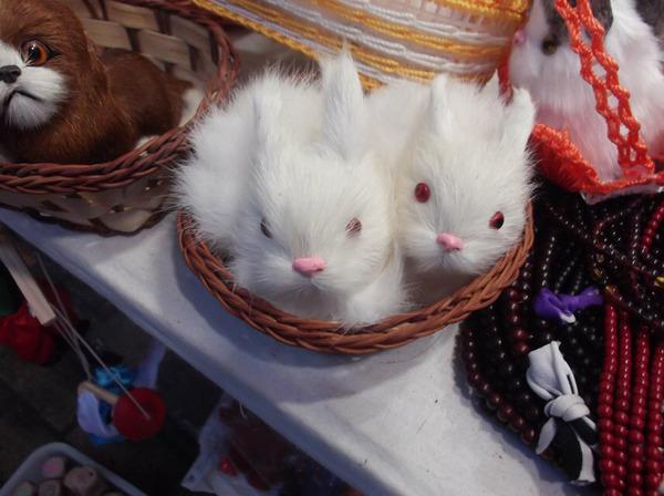 萌萌的小白兔,是不是特别的像呢